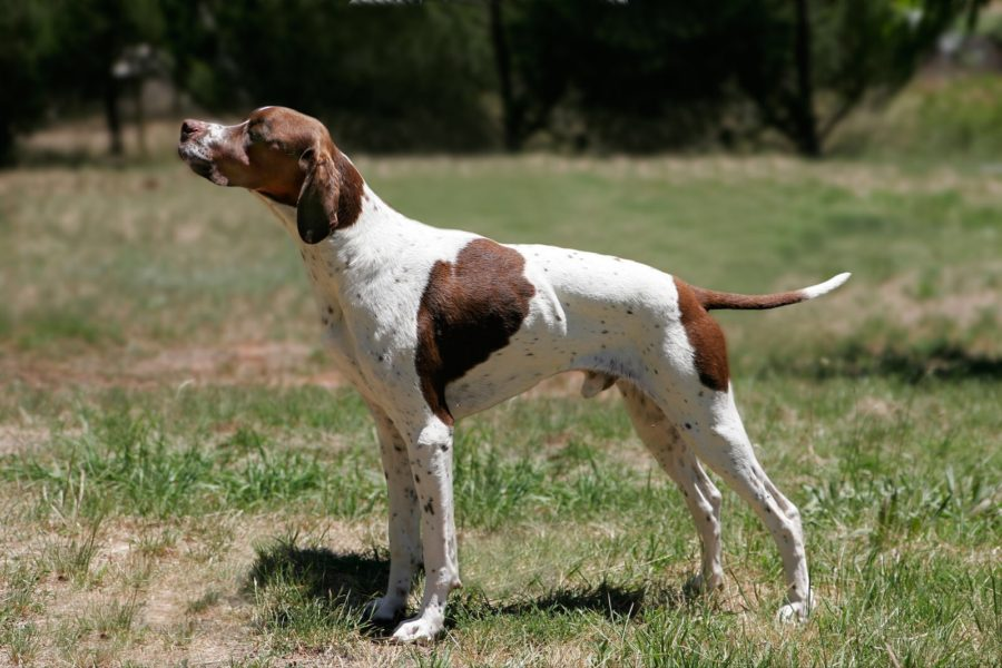 Example of a Pointer